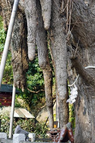 いちょうの木垂れ下がっている
