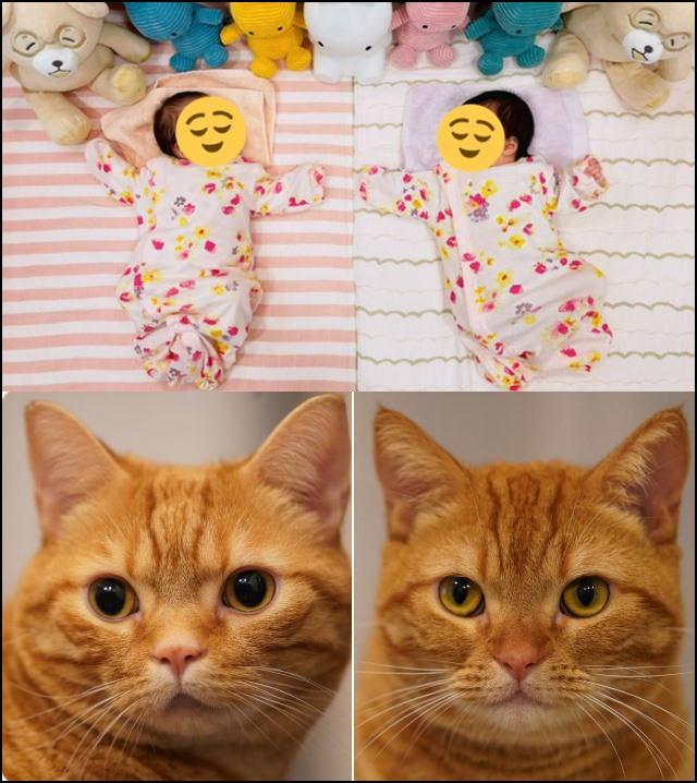 双子の女の子と猫2匹がいる画像